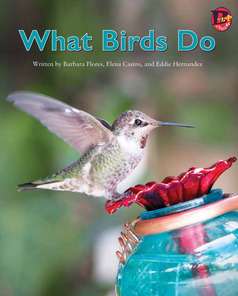 Main_what_birds_do_eng_lo_res-1