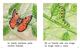 Thumb_butterfly_span_p01-082
