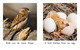 Thumb_what_birds_do_eng_lo_res-4