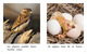 Thumb_what_birds_do_span_lo_res-4