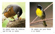 Thumb_what_birds_do_span_lo_res-5