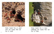 Thumb_where_do_insects_live_eng_lowresspread_page_4