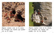 Thumb_where_do_insects_live_span_lowresspread_page_4