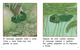 Thumb_the_tadpole_span_lowresspread_page_5